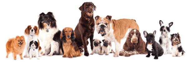 https://animalsmarttraining.com/wp-content/uploads/2018/01/b83d1d72-1d0d-47db-99ce-05fe52e1c4ca-600x200.png